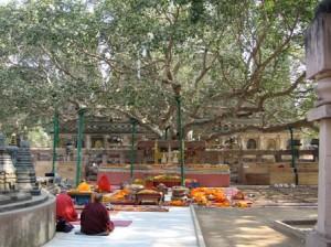 Bodhi Tree in Bodh Gaya image courtesy of Deane Curtin